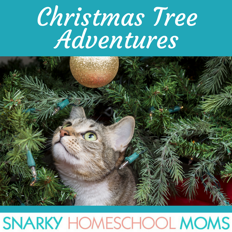 Episode 13 – Christmas Tree Adventures